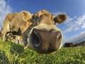 "Robert Wohlgemuth, Eschborn ""Cow Girl"", Nikon D700"