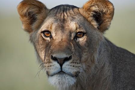 afrika_safari