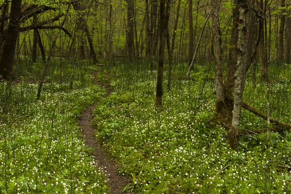 http://www.dreamstime.com/royalty-free-stock-photography-spring-trail-woods-image24498017