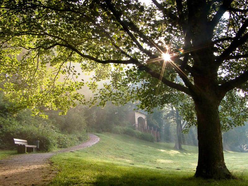 Alte Bäume filtern den Morgendunst, der sich, von der aufgehenden Sonne illuminiert, wie ein mystischer Schleier über die beliebte Lichtung der Jünglingshöhe legt. FUJIFILM FinePix S6500fd / 9,3 mm (42 mm @KB) / 1/60 Sek. bei f/8,0 / ISO 200