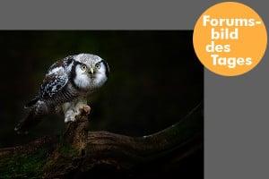 forumsbild 16-01-09