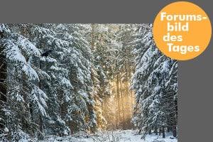 forumsbild 16-01-10