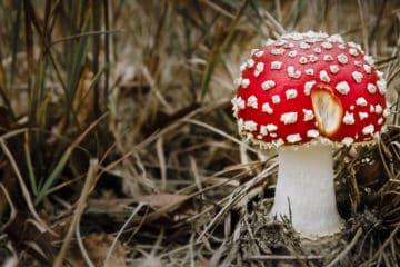 Beitragsbil Pilze sammeln