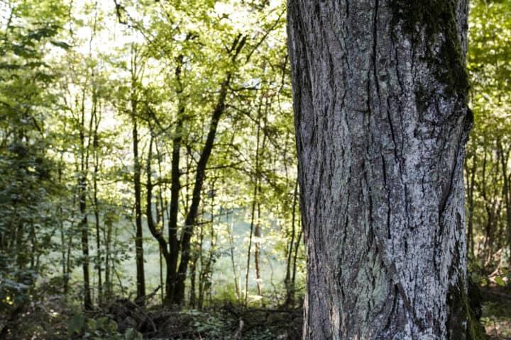 Baumstamm vor Grün