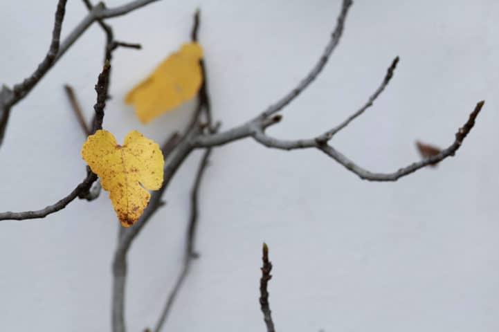 Blatt an kahlen Zweigen
