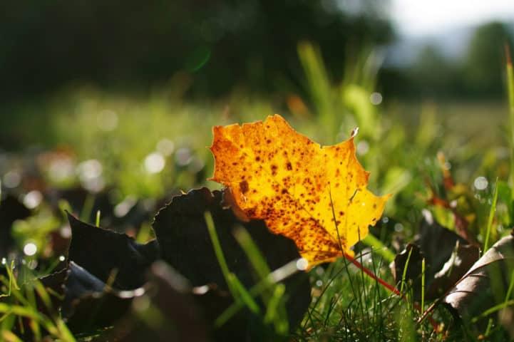 Herbstblatt. Kamera: Sigma sd Quattro H