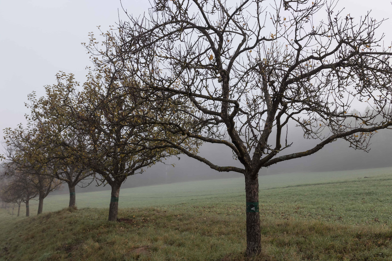 Bäume im Nebel Objektiv: Sigma 17-70 mm Contemporary