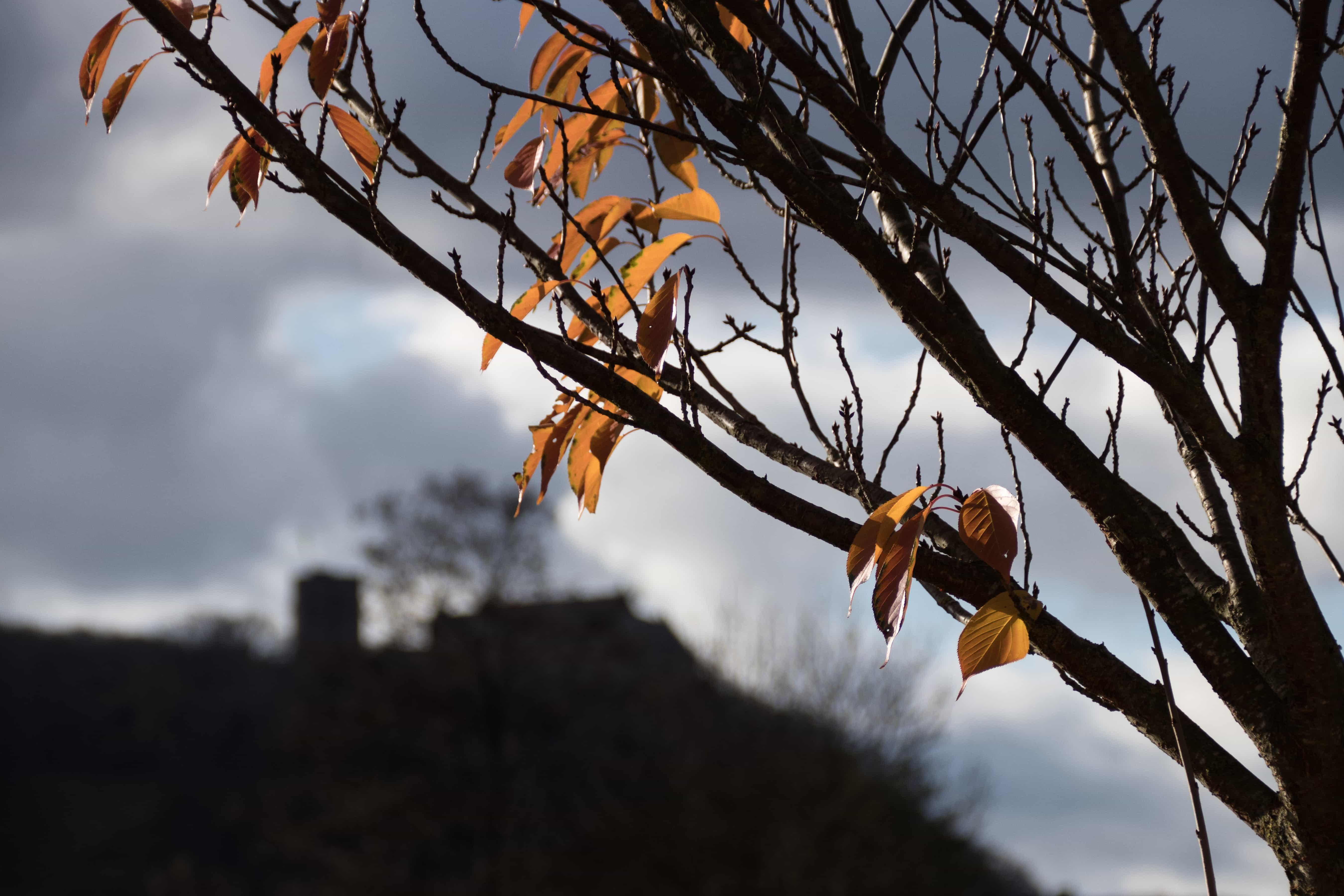 Herbstblaetter vor Schloss Saaleck - Objektiv: SIgma 18-300 mm
