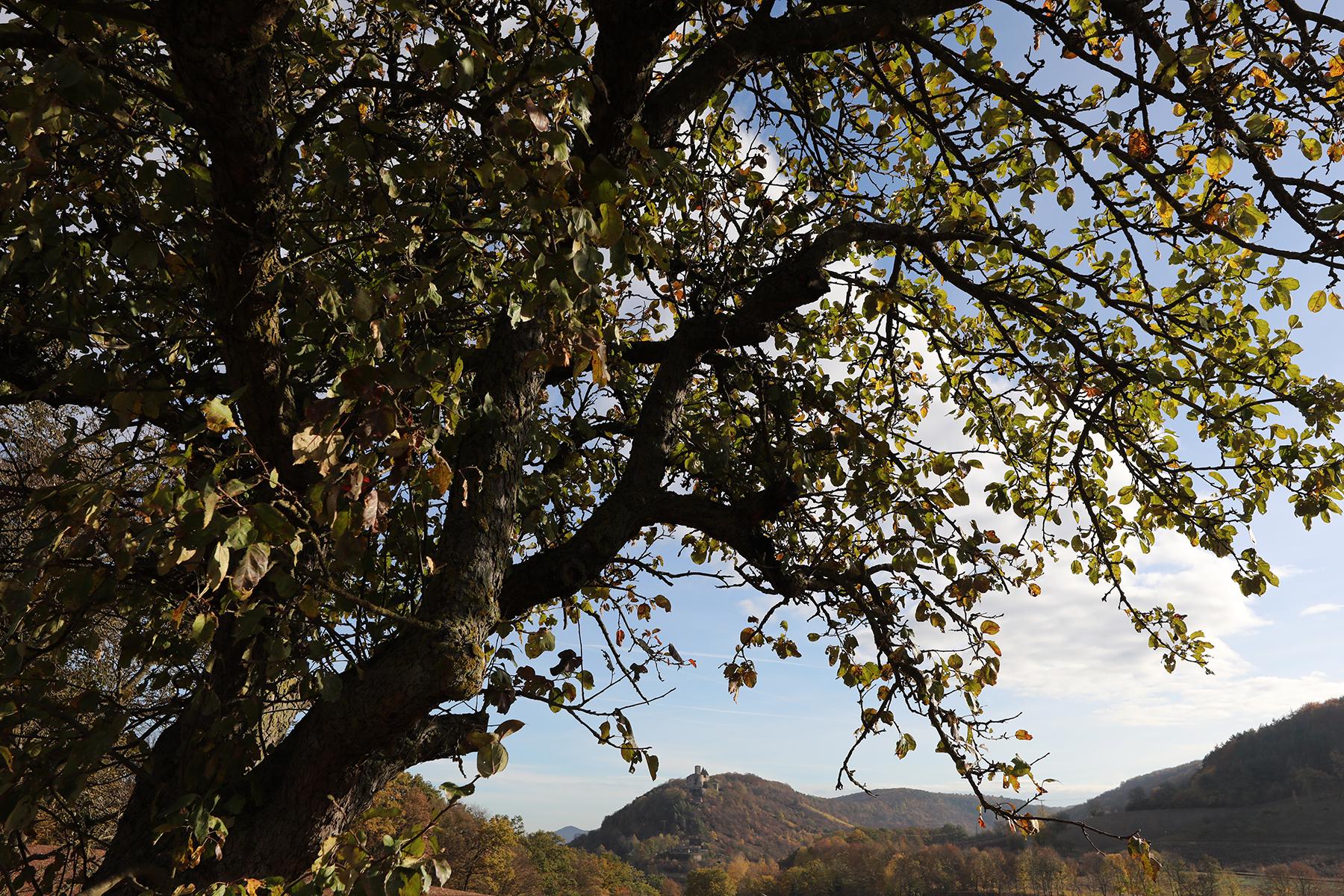 Blick auf die Trimburg fotografiert mit Sigma 14-24 mm Arts