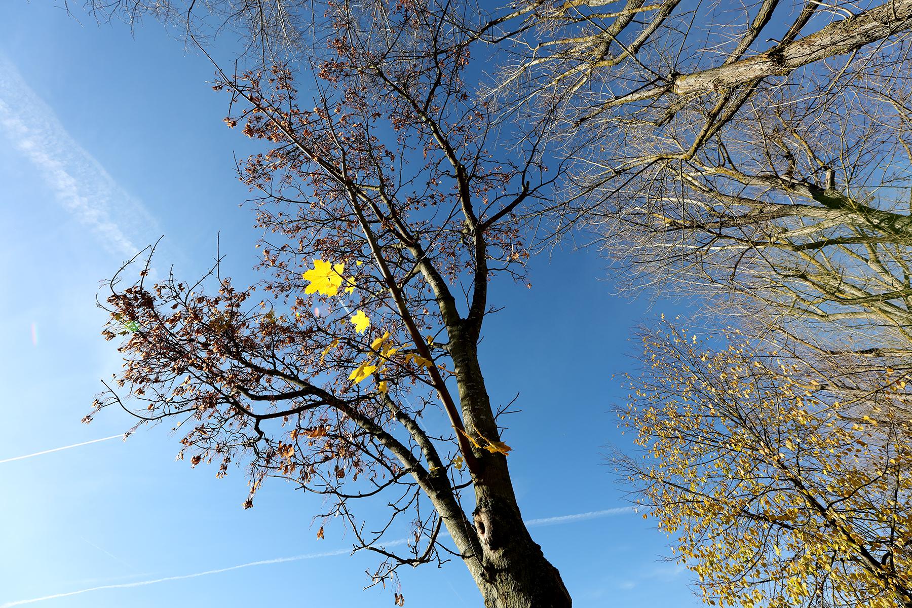Blätter und Bäume fotografiert mit Sigma 14-24 mm Arts