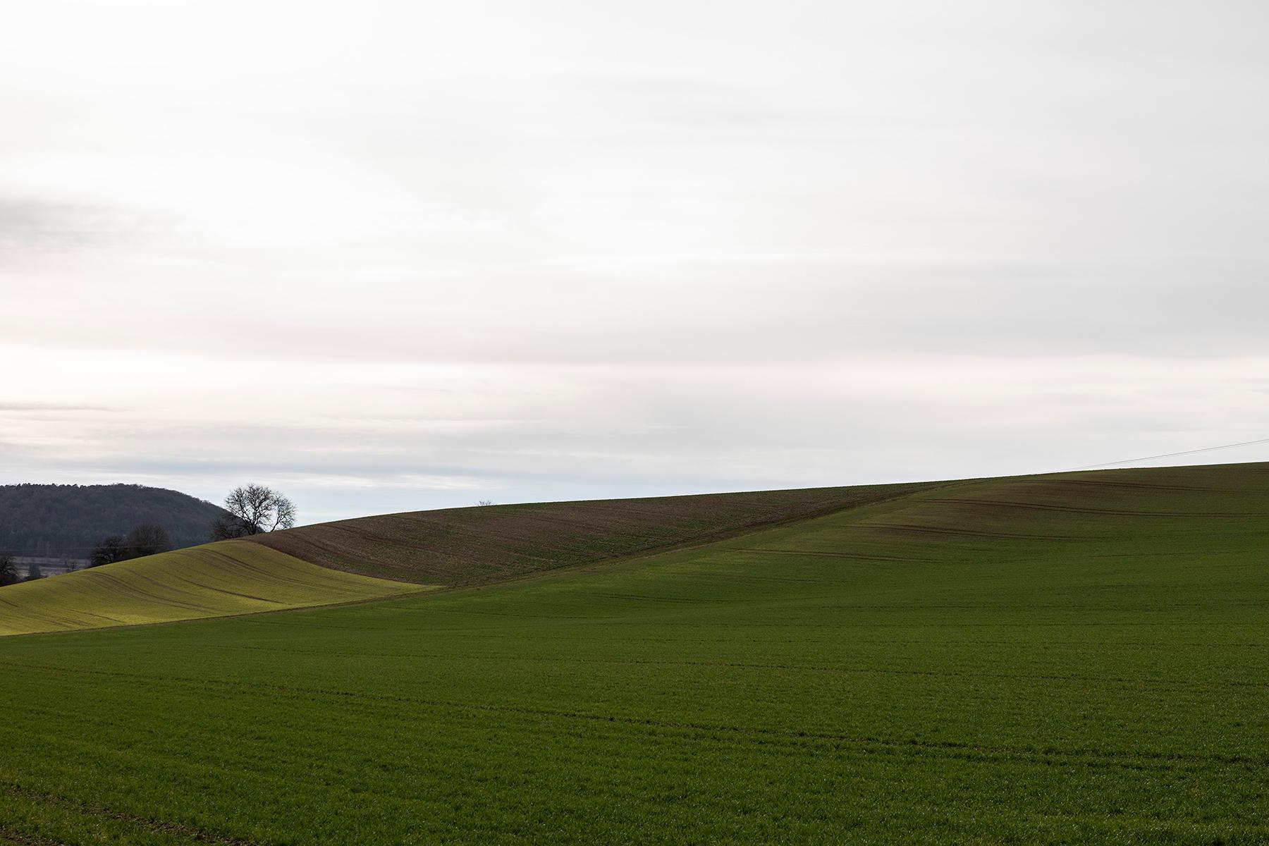 Frische Saat fotografiert mit Sigma 24-70 mm Arts