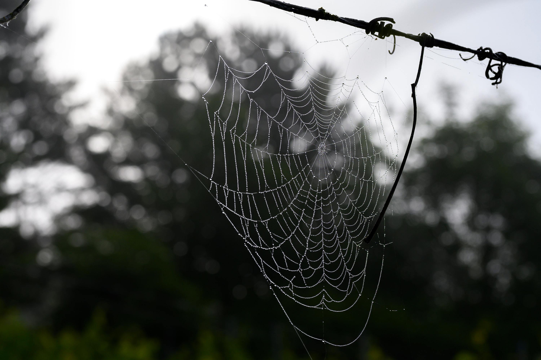Spinnennetz, aufgenommen mit Nikon Z6