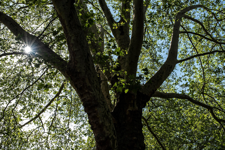 Baum und Blendenstern aufgenommen mit Tamron SP 35 mm F1.4